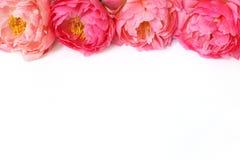 Projektująca akcyjna fotografia Kobiecy kwiecisty ramowy skład Dekoracyjny sieć sztandar robić piękne różowe peonie biały Zdjęcie Stock