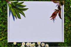 Projektuj? akcyjny photograpjy, w g?r? cyfrowej kartoteki Puste miejsce kwadrat dla sztuki pracy z zielonej trawy i bia?ych kwiat obraz royalty free