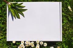 Projektuj? akcyjny photograpjy, w g?r? cyfrowej kartoteki Puste miejsce kwadrat dla sztuki pracy z zielonej trawy i bia?ych kwiat zdjęcie royalty free