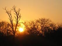 projektuje śmiesznego wizerunku setu słońce twój Zdjęcia Royalty Free