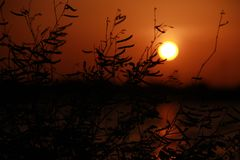 projektuje śmiesznego wizerunku setu słońce twój W fotografia royalty free
