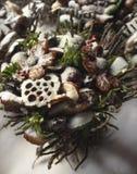 Projektuje wiązkę gałązki i suszącą - owoc w śniegu Obraz Stock