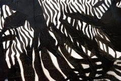 Projeto africano preto e branco Fotografia de Stock Royalty Free