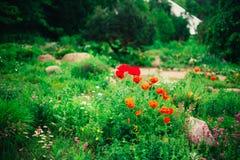 Projeto ajardinando do jardim Cama de flor, árvores verdes Fotografia de Stock Royalty Free