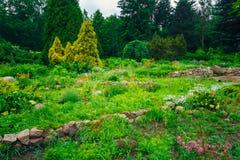 Projeto ajardinando do jardim Cama de flor, árvores verdes Imagens de Stock Royalty Free