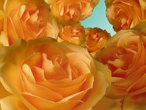 Projeto alaranjado da rosa floral Fotografia de Stock