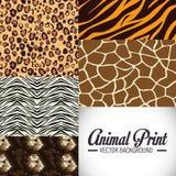 Projeto animal das cópias Fotos de Stock