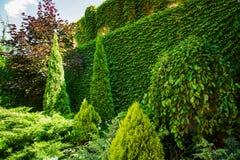 Projeto bonito da paisagem do quintal Vista de árvores coloridas e de rochas aparadas decorativas dos arbustos Imagens de Stock
