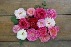 Projeto colorido das rosas no fundo de madeira Imagem de Stock