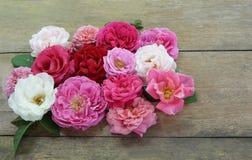 Projeto colorido das rosas no fundo de madeira Imagens de Stock