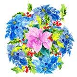 Projeto colorido, elegante do xmas com poinsétia dentro Fotos de Stock Royalty Free