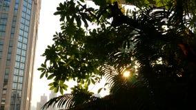 Projeto da alameda no conceito a favor do meio ambiente verde Jardim de suspens?o do ar livre em terra?os Eco futurista video estoque