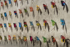 Projeto da arte de um grupo de borboletas coloridas Imagem de Stock Royalty Free