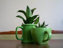 Projeto da decoração Potenciômetros de flor originais sob a forma dos copos de chá Imagem de Stock