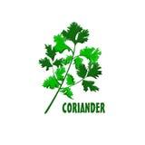 Projeto da exploração agrícola de Logo Coriander Fotografia de Stock