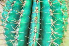 Projeto da forma do cacto Stillife mínimo Cores brilhantes na moda Humor de néon verde foto de stock royalty free