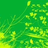 Projeto da ilustração da planta verde e da flor ilustração do vetor