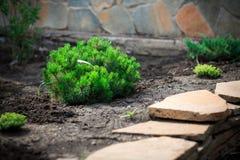 Projeto da paisagem e seus elementos na fotografia Foto de Stock