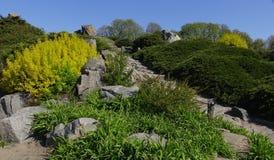 Projeto da paisagem Montes com vários tipos das plantas e das flores Imagens de Stock