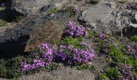 Projeto da paisagem Montes com vários tipos das plantas e das flores Fotos de Stock Royalty Free