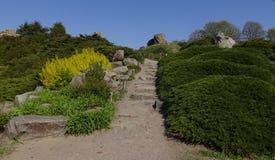 Projeto da paisagem Montes com vários tipos das plantas e das flores Imagens de Stock Royalty Free