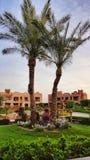 Projeto da paisagem no hotel de Egito Fotografia de Stock