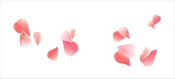Projeto das flores Floresce as pétalas Pétalas do voo de Sakura no fundo branco Flores das rosas das pétalas Ilustração Stock