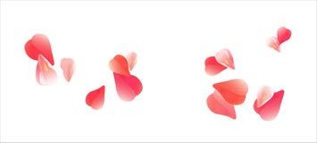 Projeto das flores Floresce as pétalas Pétalas do voo de Sakura no fundo branco Flores das rosas das pétalas Foto de Stock Royalty Free