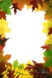 Projeto das folhas de outono Fotos de Stock Royalty Free
