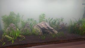 Projeto de aquário imagens de stock royalty free