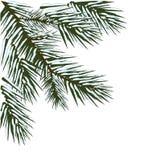 Projeto de canto verde do inverno ilustração stock
