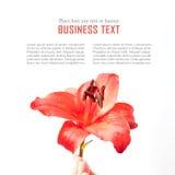 Projeto de cartão da flor Foto de Stock Royalty Free