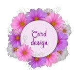 Projeto de cartão da flor do cosmos Convite redondo Fotografia de Stock