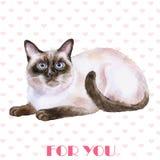 Projeto de cartão Retrato da aquarela do gato preto e branco siamese do cabelo curto isolado no fundo dos corações Fotos de Stock