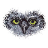 Projeto de conceito da coruja da cara O pássaro é isolado sobre Foto de Stock