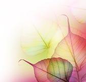 Projeto de Leaves.Floral Foto de Stock