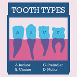 Projeto dental Imagem de Stock Royalty Free
