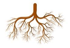 Projeto do ícone do símbolo do vetor dos desenhos animados da planta da raiz Illustr bonito
