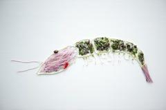 Projeto do camarão usando brotos Imagem de Stock