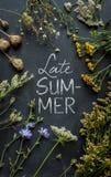'Projeto do cartaz do fim do verão' Flores e plantas do prado no quadro preto Imagem de Stock Royalty Free