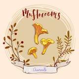 Projeto do cogumelo Imagem de Stock Royalty Free