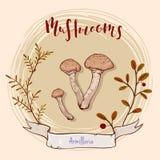 Projeto do cogumelo Imagens de Stock Royalty Free