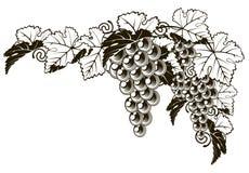 Projeto do estilo do vintage das uvas Imagens de Stock