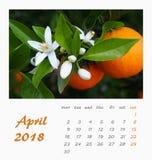 Projeto 2018 do inseto do molde do calendário de mesa de julho valença Imagem de Stock