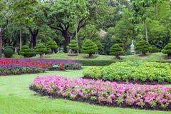Projeto do jardim, flor, anão da árvore foto de stock royalty free