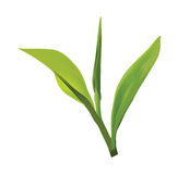 Projeto do logotipo da folha de chá Fotos de Stock