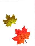 Projeto do outono Fotografia de Stock Royalty Free
