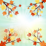 Projeto do outono Foto de Stock Royalty Free