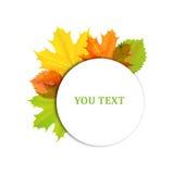 Projeto do outono das folhas Fotografia de Stock Royalty Free