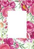 Projeto do quadro da aquarela com peônias e folhas Fundo floral pintado à mão com elementos florais, peônia, rosas ilustração royalty free